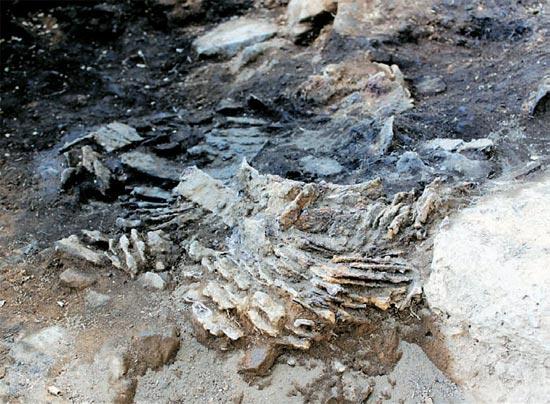 高句麗時代のものと推定される鉄の鎧(よろい)が京畿道漣川郡で発掘された(写真=文化財庁提供)。