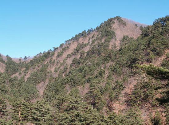 稜線にそって松が消えている山の風景。(写真提供=国立山林科学院ペ・サンウォン博士)