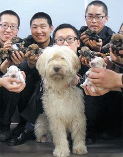 慶北(キョンブク)地方警察庁鬱陵(ウルルン)警備隊員がサプサル犬の母犬「ドクト(独島)」と子犬8匹を世話している。