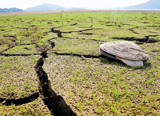 5月の降水量が平年に比べて37%にすぎず、全国的に干ばつによる被害が懸念されている。