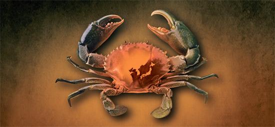 不気味な蟹を最初に食べたときと同じように、韓日中も関係回復には大きな勇気が必要だ(イラスト=パク・ヨンソク)。