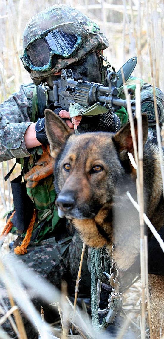 2日、慶北道軍威郡華北里(キョンブクド・クヌィグン・ファブクリ)の華山(ファサン)遊撃場で201特功旅団隊員が軍犬とともに仮想敵を捜索している。