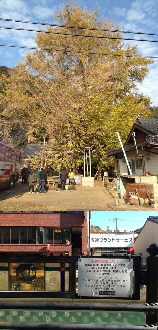 百済に由来する樹齢1500年のイチョウ(上)と「対馬は日本の領土」と表示した厳原港近くの表示板。