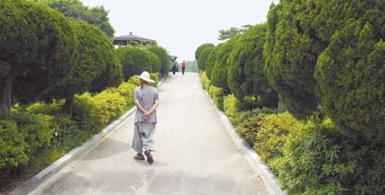 国立顕忠院に大量に植えられている日本原産のカイヅカイブキ。国会は市民団体の請願を採択し、韓国固有の木に交替することにした。