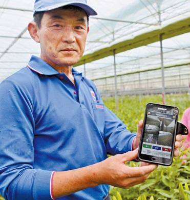 済州道西帰浦市でユリを栽培するヤン・ホンチャンさん。ヤンさんはSKテレコムの「スマートファームサービス」を活用し、ビニールハウスを遠隔制御している。これにより温度調節と給水などの作業をスマートフォンで処理できるようになり、働き手を大きく減らした。(写真=SKテレコム)