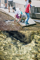 人工河川の清渓川ですが、魚の群れを簡単に見ることができるので、親子連れもたくさん。元気いっぱいの子どもたちは水遊びに夢中です。