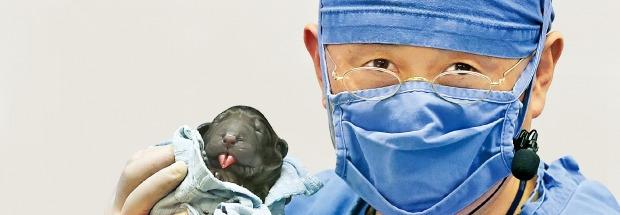 「573番目のクローン犬が生まれました」。スアム生命工学研究院の黄禹錫博士が573番目のクローン犬を手に取り見せている。