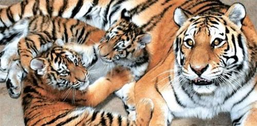 6日午後、大田動物園で公開された白頭山(ペクドゥサン)トラの姉妹、アルコンとタルコン。左は母トラのヨンジ。