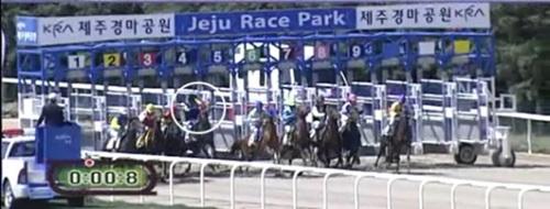 2011年5月20日、済州道競馬場で4番の馬が頭を上げてスタートしている。この馬の騎手はブローカーから1200万ウォンを受け、意図的に手綱を引いて速度を落としたことが分かった。(写真=ソウル中央地検(動画キャプチャー))