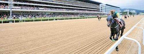 11日に京畿道果川市のレッツランパークソウルで開催される「コリアカップ」には8カ国を代表する名馬が参戦する。3冠馬のパワーブレイドが韓国代表として出場する。(写真=レッツランパーク)