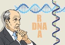米化学者ロジャー・コーンバーグ氏がRNAの転写のメカニズムを解明して2006年にノーベル化学賞を受賞した。