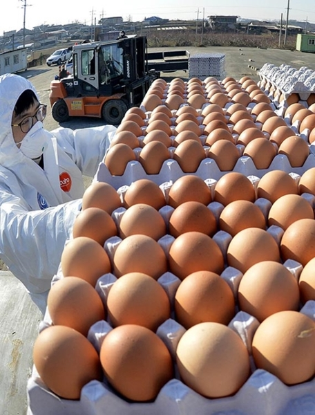 28日、忠清南道天安市の臨時集荷場で、関係者が近隣の養鶏農場で生産された卵を車両に移動させている。