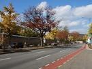 韓国伝統家屋・韓屋(ハノッ)の街並みが観光客にも人気の三清洞(サムチョンドン)。「景福宮(キョンボックン)」からメインストリート・三清洞通り(サムチョンドンゴリ)に続く道は、赤や黄色に色づいた紅葉を眺めながら歩ける絶好の散歩道です。