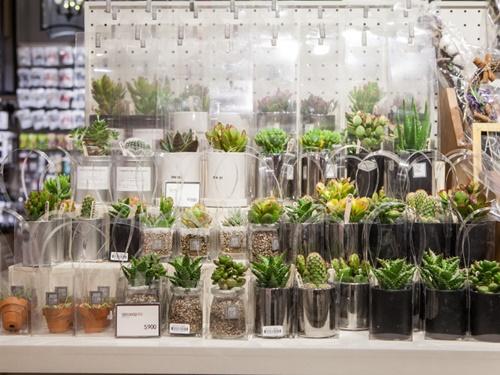 可愛い雑貨にまぎれて陳列されているのが、空気の清浄化を助ける植物。PM2.5対策としてはもちろん、お洒落なインテリアとしても使えます。