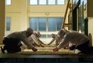 石本酒造の職員が酒の原料になる麹を作っている。(写真提供=石本酒造)