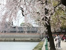 暖かくなってきたこの時期は、花々も素敵。冬季期間は観覧できなかった集玉斎(チボッチェ)の図書館および八隅亭(パルジョン、カフェ併設)も4月1日からオープンし、この時期ならではの楽しみがいっぱいです。