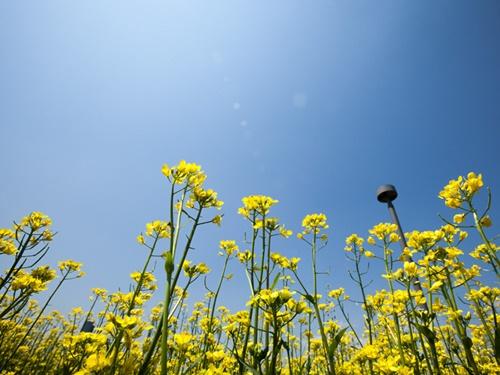 今年のソウルは花冷えが長く続きましたが、最近では晴れの日も多くなり、ようやく春らしい暖かさに安定してきました。