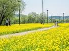 散歩が楽しめる漢江沿いの遊歩道は、無料で入場可能です。