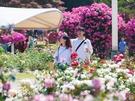 「ソウル大公園」は、植物園「テーマガーデン」のほか、動物園や遊園地「ソウルランド」、コンテンポラリーアートを集めた国立現代美術館がある一大文化公園。家族連れやカップルに人気の行楽地です。