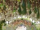 カボチャやヘチマがなったトンネルは、秋の訪れを撮影できる絶好のフォトスポットとしてSNSで話題。公園内には、漢江(ハンガン)や南山(ナムサン)を見渡せる展望デッキもあります。