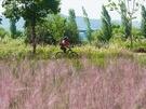秋になると行楽で訪れる人々で賑わう「漢江(ハンガン)公園」。11ヶ所ある「漢江公園」の一つ、「蚕院(チャモン)漢江公園」に先月「グラス庭園」が開園し、新たなスポットとして話題です。