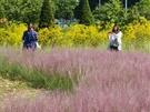 満開の時期はまるでピンク色の海のようになり、韓国女子の間ではSNS映えスポットとして人気です。