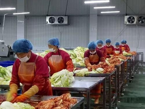 中国同仁食品生産ラインで職員がキムチのヤンニョム(味付け)作業をしている。中国では朝鮮族に続いて漢族もキムチを食べ始めるようになり、内需市場が拡大している。(写真提供=同仁食品)
