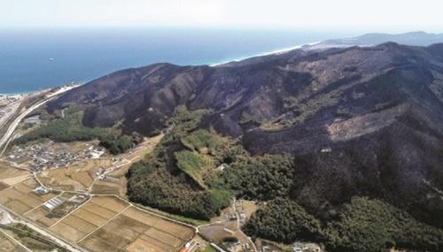 7日、山火事によって広い範囲で山林が消失した江原道江陵市玉渓面の様子。