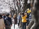 今週ソウルにお越しの方は、お花見を楽しんでみてはいかがでしょうか?
