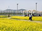 訪れた人々も、美しい花畑の写真をカメラに収めながらピクニックやデートを楽しんでいます。
