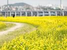遊歩道が整備されており、漢江沿いをゆっくり散歩することもできます。
