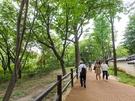 ソウルのど真ん中とは思えない緑豊かな散策路。