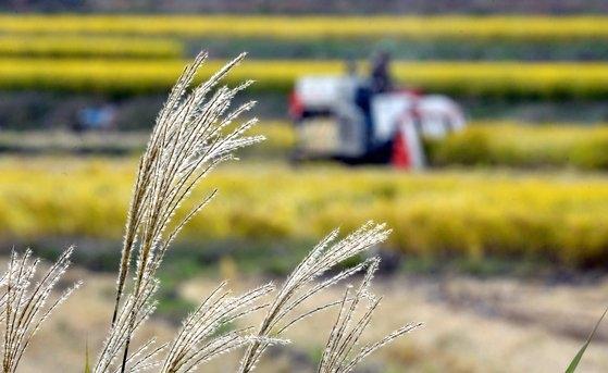 昨年10月、大田(テジョン)城北洞でコンバインに乗って稲刈りをする農民。[中央フォト]