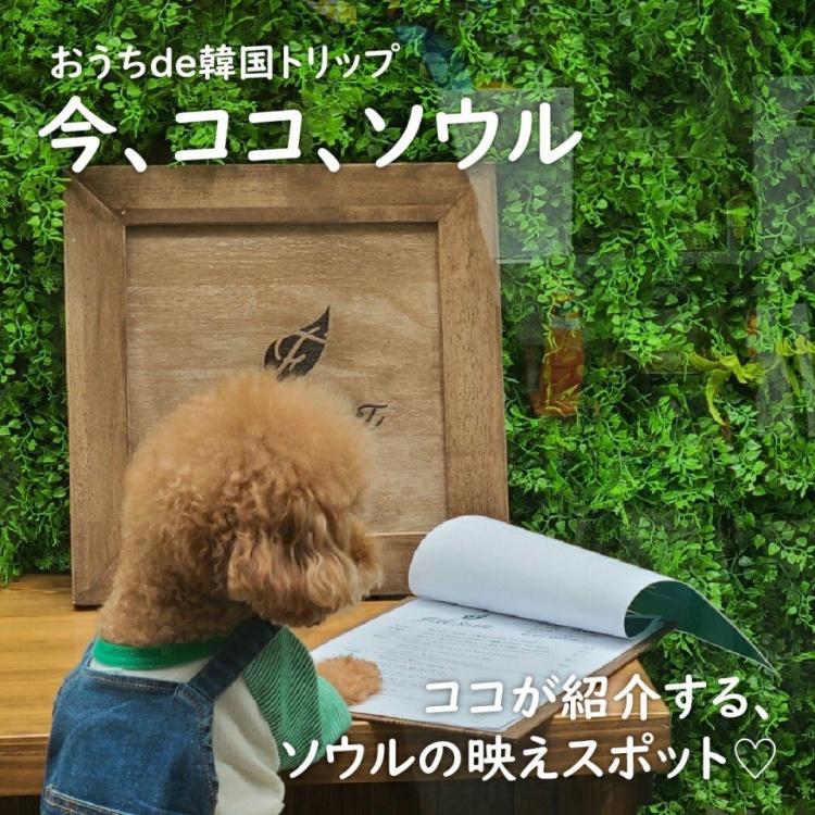 子犬が延南洞(ヨンナムドン)のカフェでメニューを見ている姿