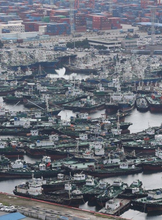 台風9号が韓半島(朝鮮半島)に向かって北上中の1日、釜山港第5埠頭に船舶が避難している。 ソン・ポングン記者