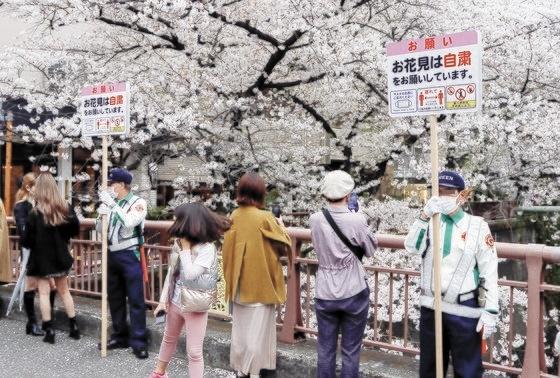 東京目黒区で28日(現地時間)、「お花見は自粛をお願いしています」の立て札を持った警備員の間で住民たちが桜の花を見物している。[写真 共同=聯合ニュース]